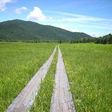 みなかみペンション朝ねぼうのおすすめ観光スポット「尾瀬国立公園」