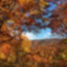 みなかみペンション朝ねぼうのおすすめ紅葉スポット「水源の森」