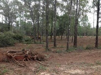 land clearing.jpg