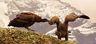 tours wildlife torres del paine