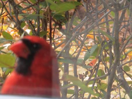 Mr. Cardinal Update: 10/20/21