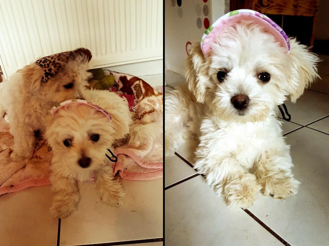 Sara & Sasha (7 Monate) aus Düppenweiler mit ihren feschen Hundemützen!