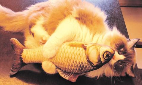Katze Frieda (8) aus Berlin liebt ihren Catnip-Fisch!