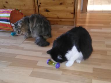 Katze Ruby (3 Jahre) aus Ensdorf hat nun ihre eigene Futterrolle.