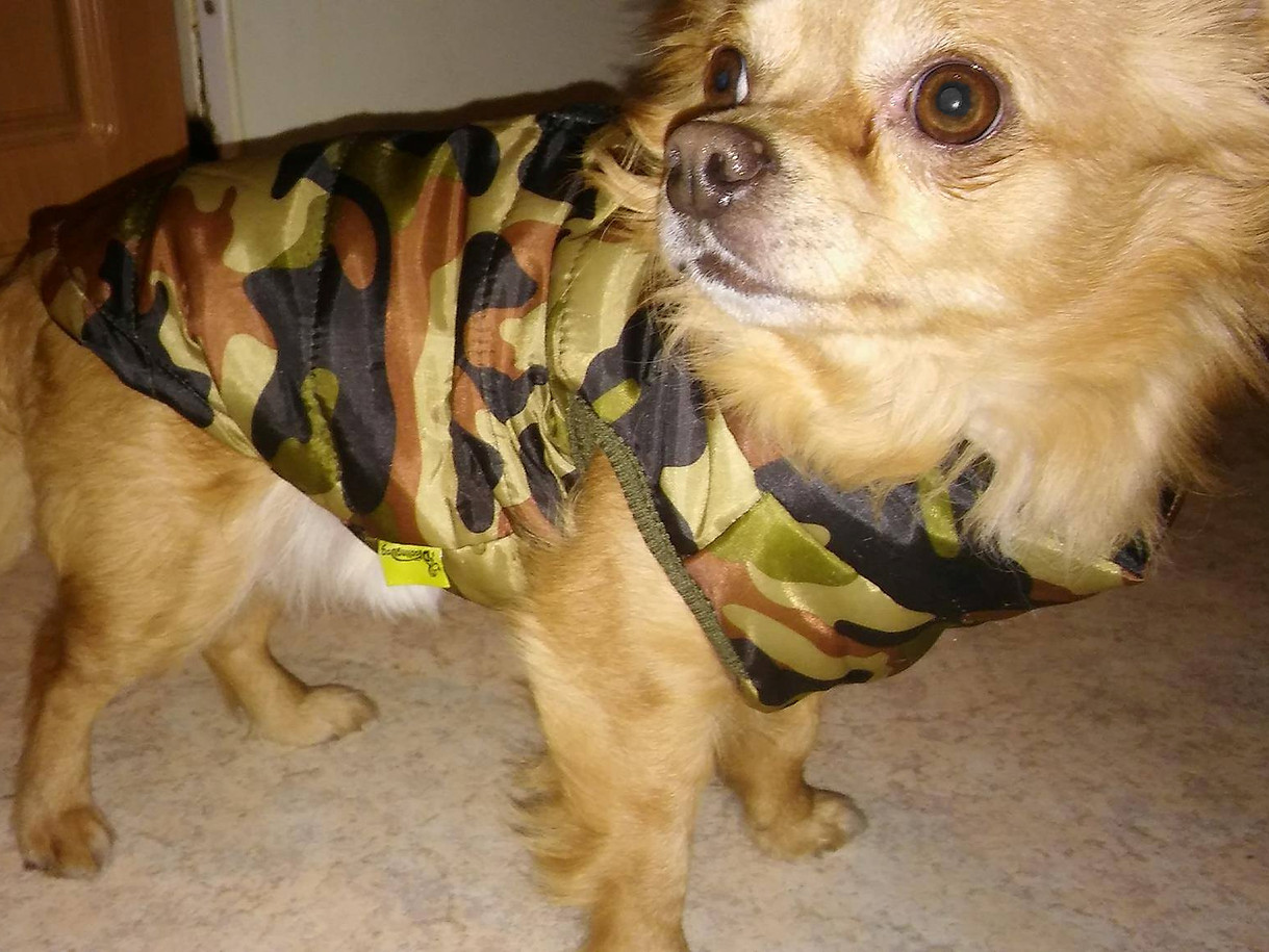 Foxi (3 Jahre) aus Lucka präsentiert seinen Camo-Mantel.