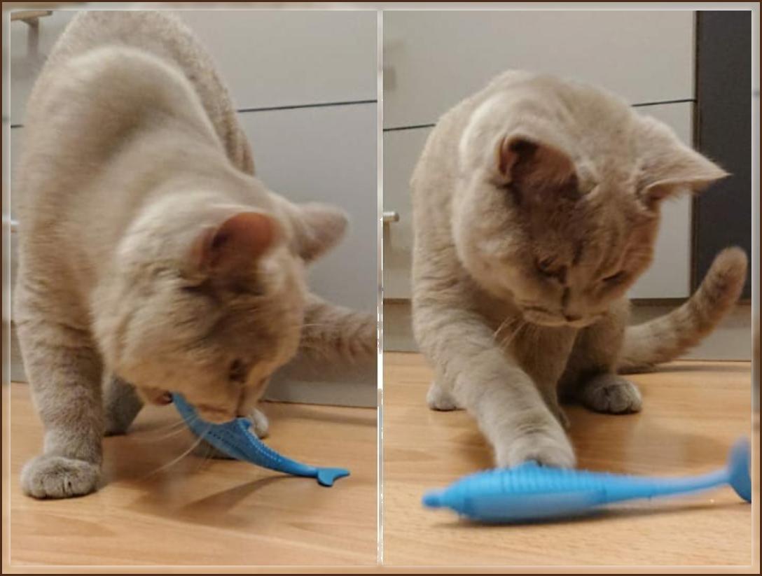Balu (6 Monate) aus Villingen-Schwenningen testet seinen Chewing-Dolphin!