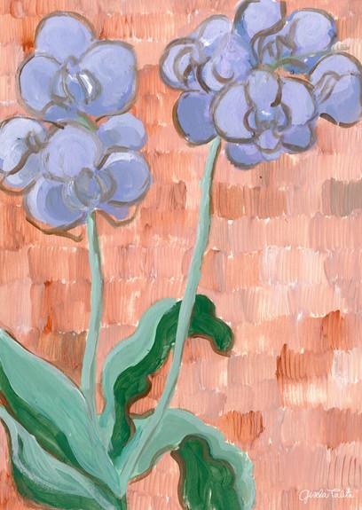 orquideas del estudio