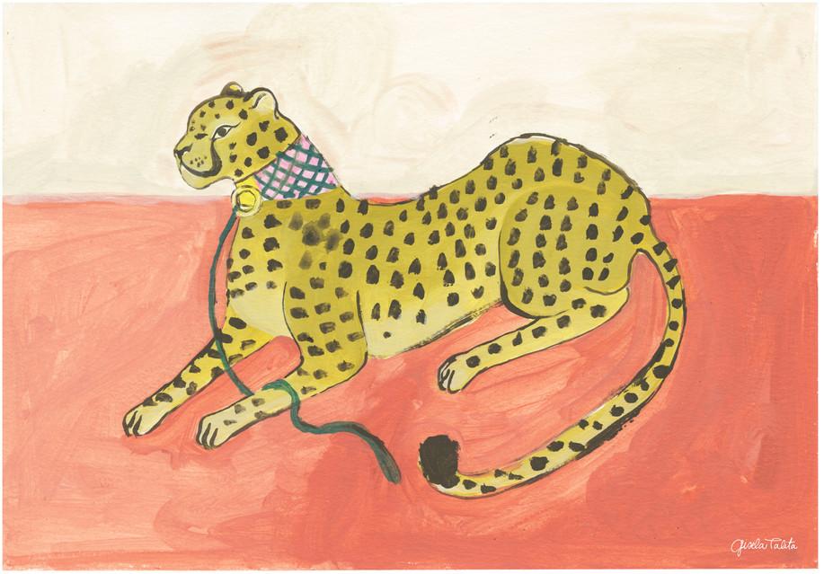 Leopardo con collar