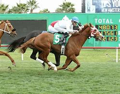 "SPOOKY CHANNEL voted ""Horse of the Meet"" at Turf Paradise."