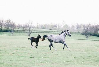 Mare and foal enjoying the spring sunshine