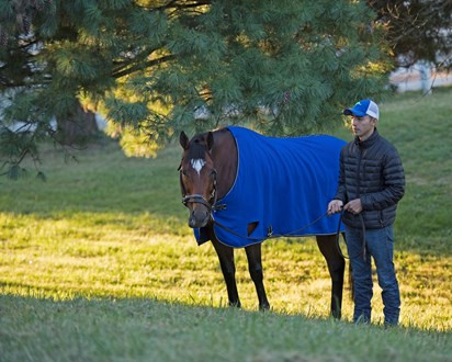 Heart to Heart relaxing before the G1 Shadwell Mile.