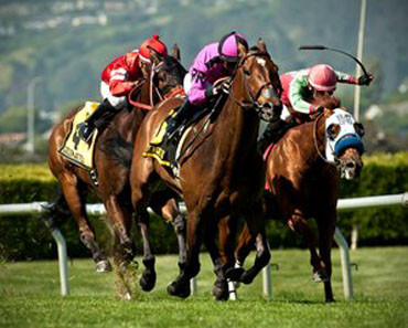Pictured here winning the 2015 Rolling Green Stake.
