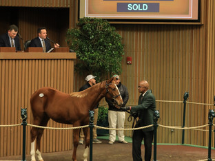 Highest price weanling to sell in 2019.