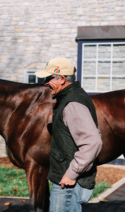 Evaluating stallions.