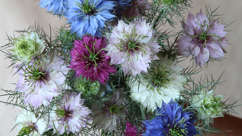 Seed - Nigella, Persian Mix
