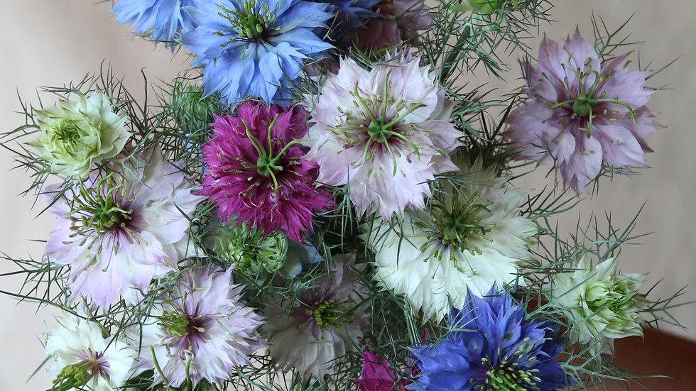 Seed - Nigella, Persian Mix