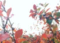 IMG_1447_edited.jpg