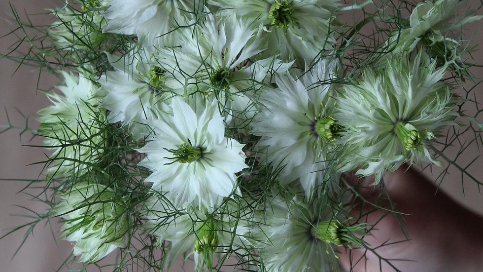 Nigella, White ~ 15 stems