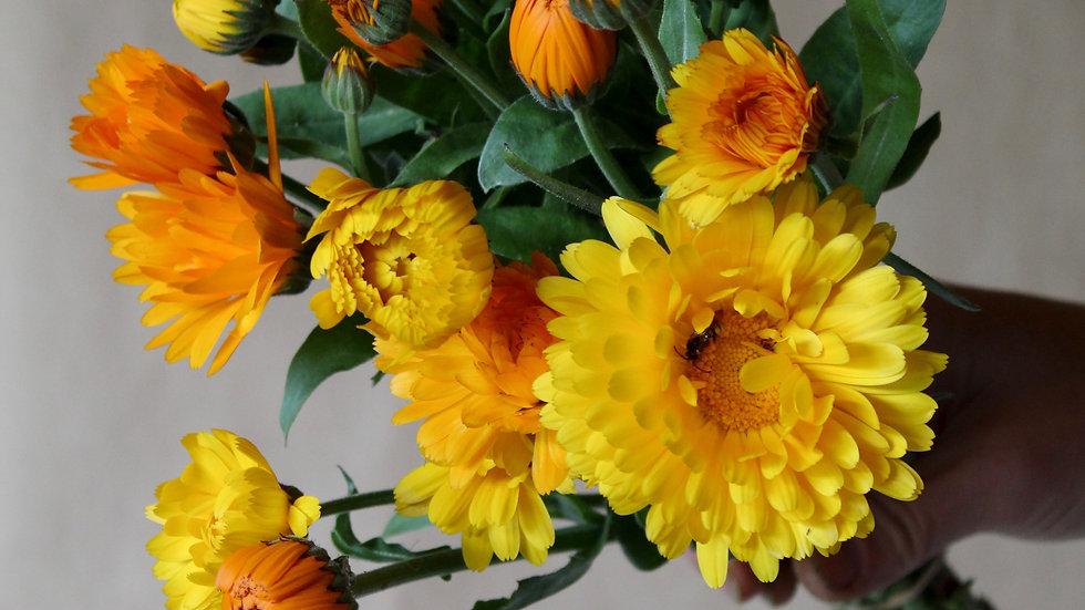 Seed - Calendula, Pacific Beauty Mix