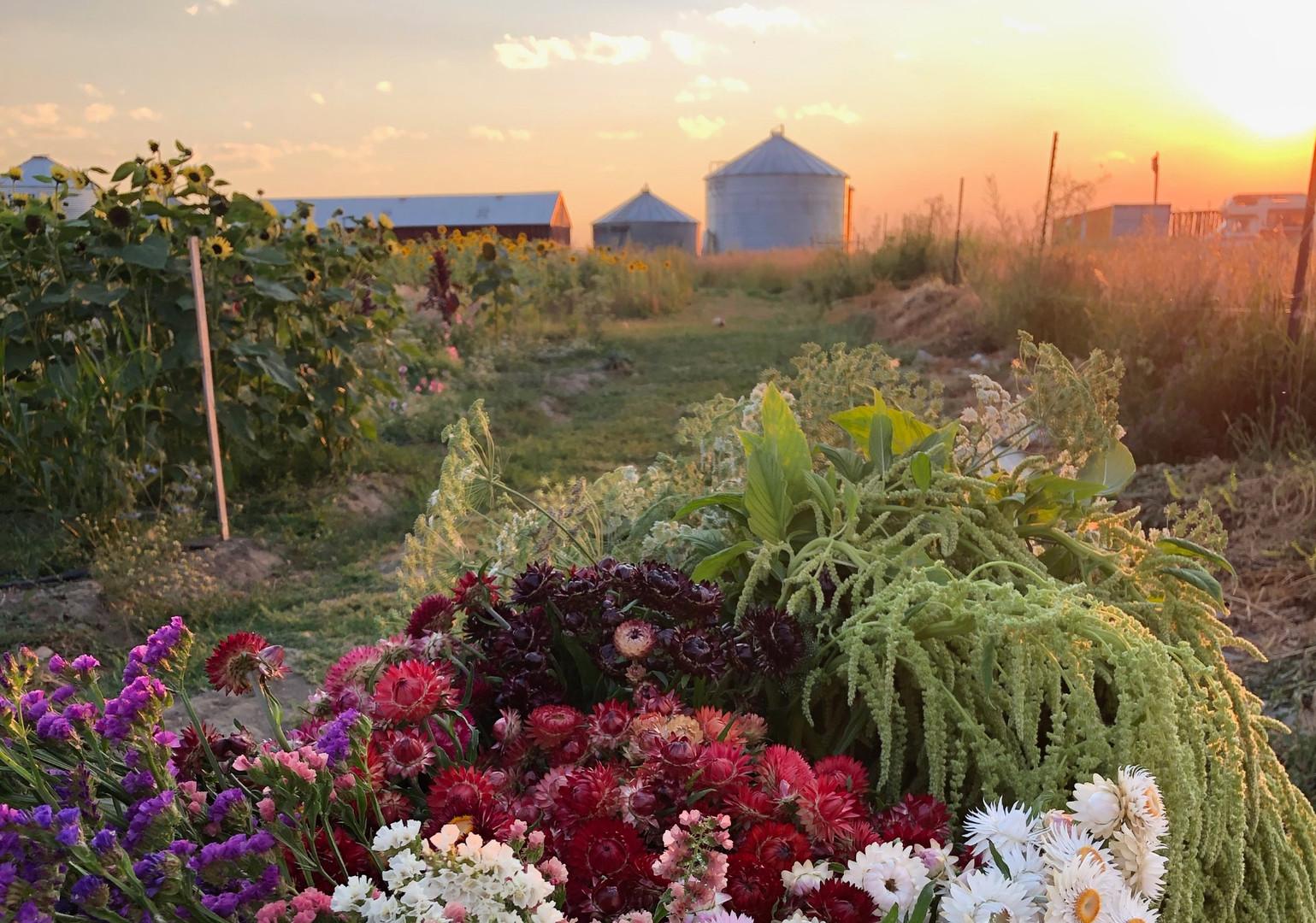 Mid summer field at Alberta Girl Acres