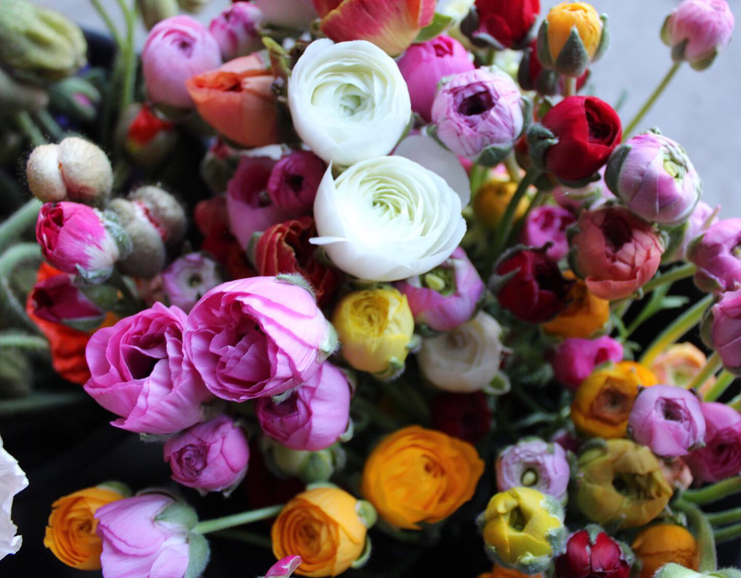 Freshly harvested ranunculus.