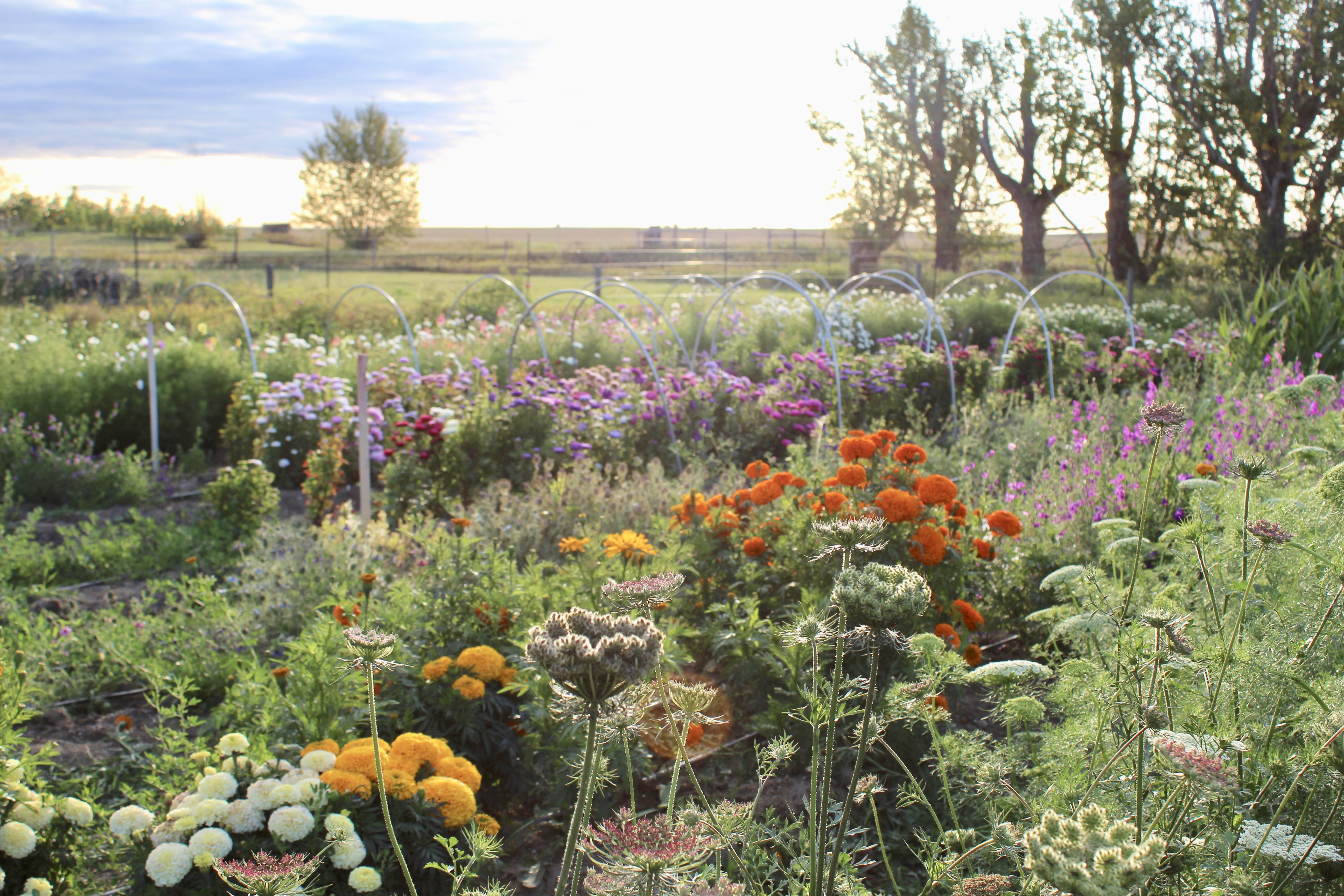 Mid summer flower field, 2019.