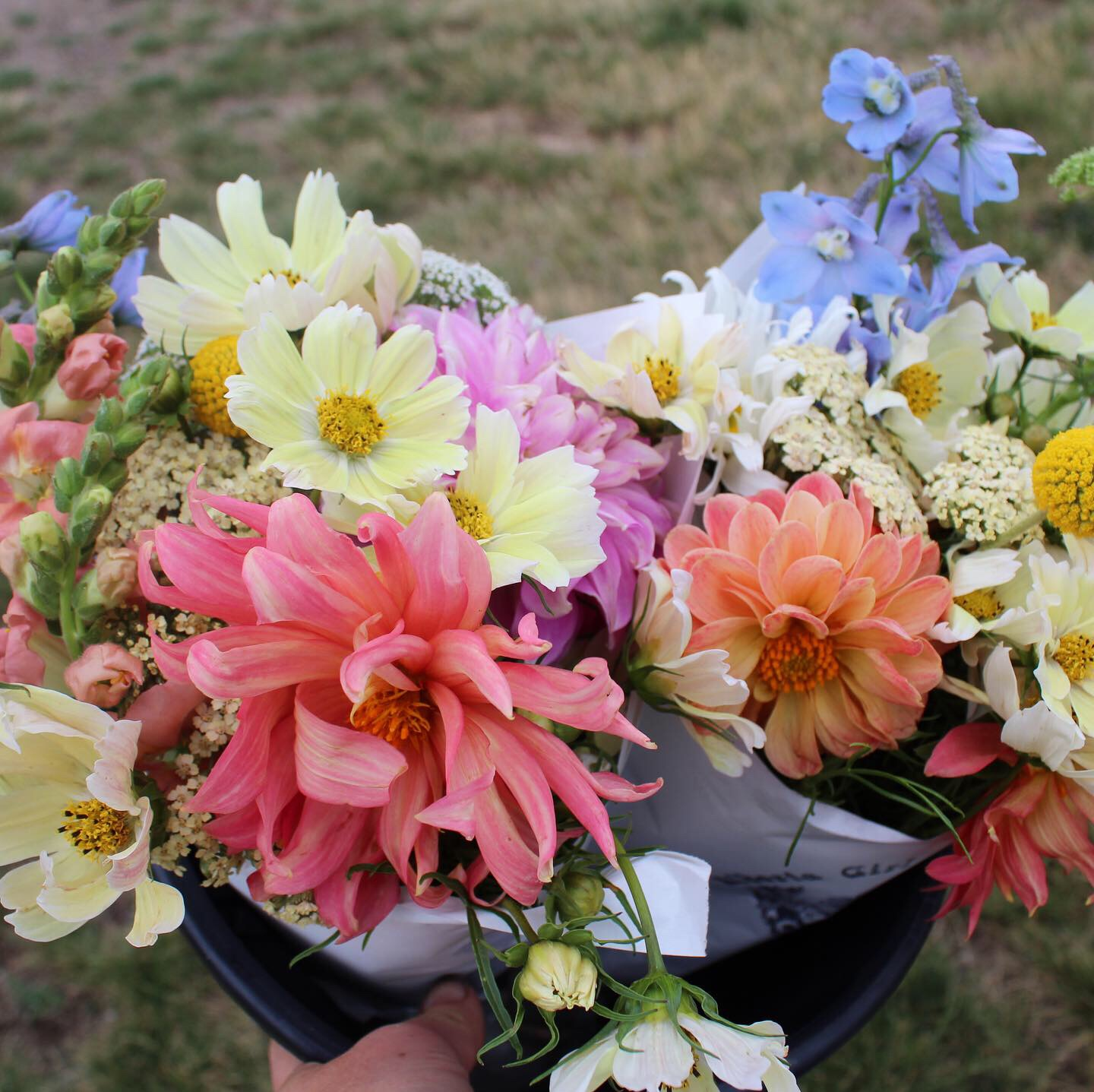 """Pink lemonade"" CSA bouquets."