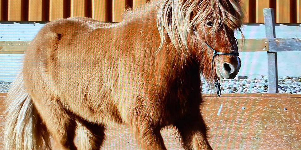 Ponynachmittag