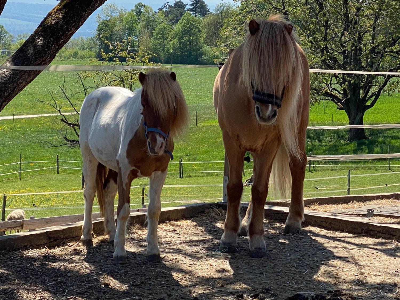 Ponyreiten geführt, mit Eltern