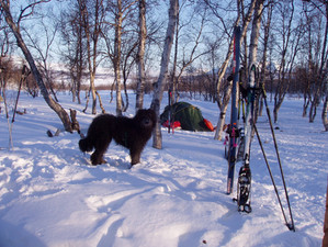 Guy's First Arctic Ski Touring Trip.Part Seven (Finale)