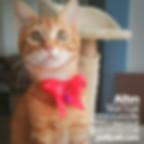 ücretsiz kedi sahiplendirme ilanı 1