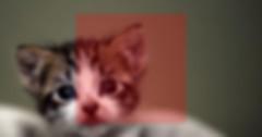 ücretsiz kedi sahiplendirme ilanlarında kedinin yüzünün fotoğrafın orta kısmında yer almadığını gösteren temsili resim