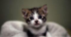 ücretsiz kedi sahiplendirme sitesinde bulanık fotoğraf olmamalıdır