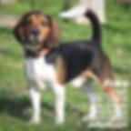ücretsiz köpek sahiplendirme ilanı 2
