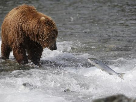 Wild Alaska Seafood – An Overview