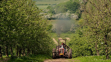 orchard tractor hill.jpg