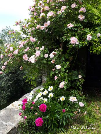 Il mio angolo preferito in giardino