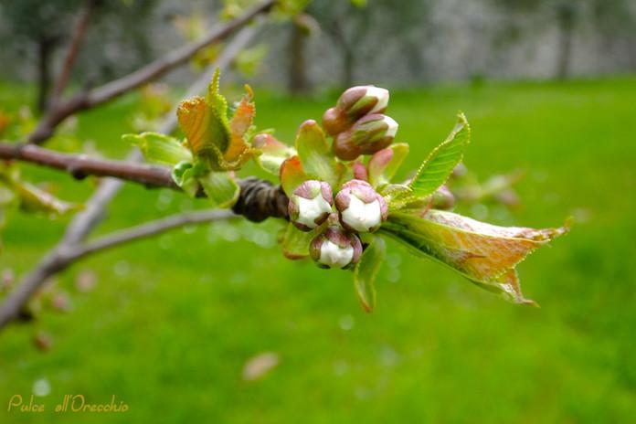 E' primavera...