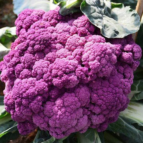 Purple Cauliflower