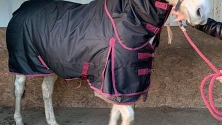 Heavyweight turnout rug with detachable neck