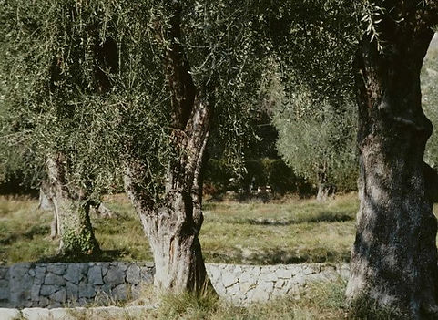 olivier-l760-h550.jpg