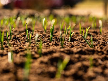Gartenarbeit im Mai – Was im Garten im Mai zu tun ist