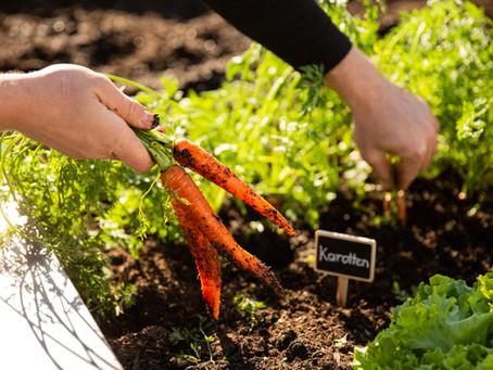 Gartenarbeit im Juni – Was im Garten im Juni zu tun ist