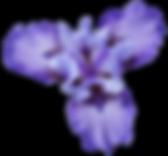 PNG-images-Iris-17png.png