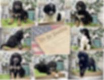 Collage004.jpg