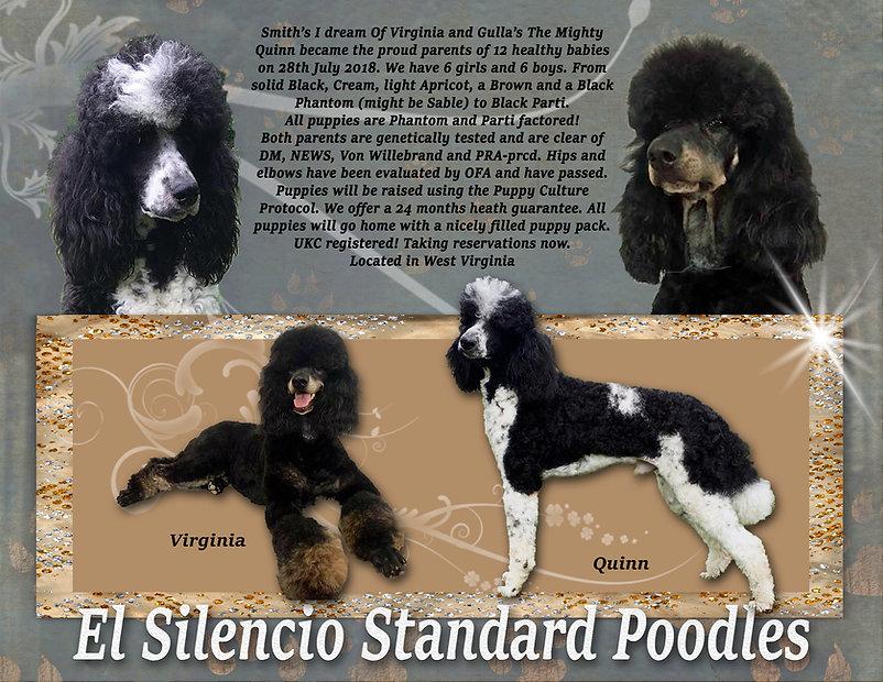 Virginia Quinn Puppy Announcement.jpg