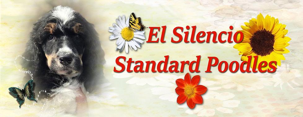 El Silencio Standard Poodles