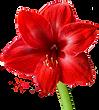 amaryllis-3198940960720png.png
