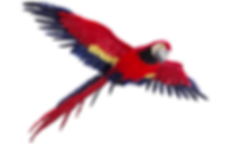 PNG images Parrot (11).png.png