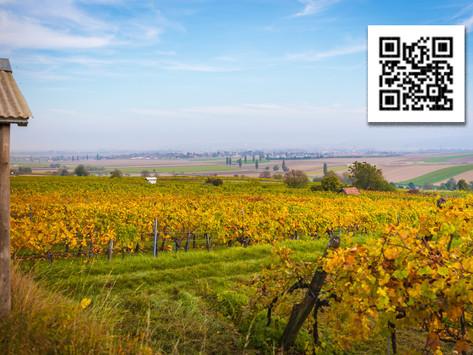 Wein- und Rebsortenlehrpfad regt zum Verkosten an